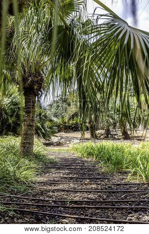 Passage in the lush green tropical garden with grass trees and bushes gravel and irrigation pipes light and shadows