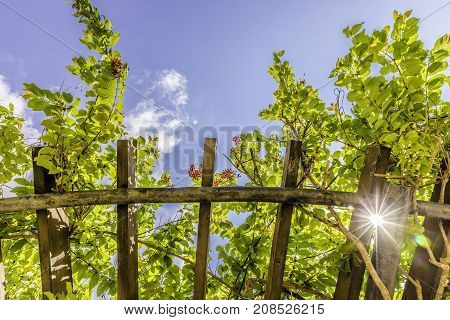 Arbor roof with green lush vegetation small red flowers and strong sun rays