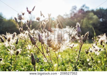 Meadow flowers in backlight. Autumn nature. Beautiful place.