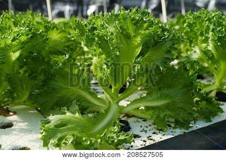 Organic Vegetable Farms