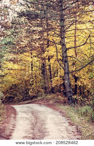 Rural tourist trail by autumn. Seasonal natural scene. Beauty in nature. Vibrant colors. Red photo filter.