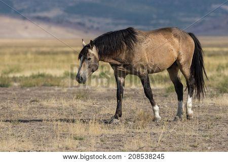 a beautiful wild horse in the Utah desert