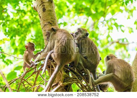 A Group Of Monkeys Munching On A Tree In Asia