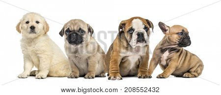 group of puppies, isolated on white