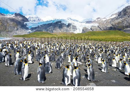 beautiful rocky beach with penguins near snow mountains in antarctic