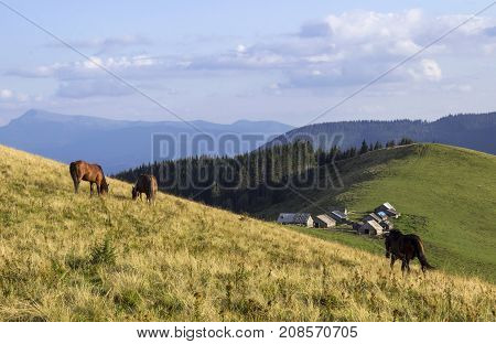 Three Brown Horses Eating Grass Near The Trees In The Mountains.