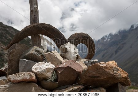 Goat Skull In Himalayas, Nepal. Animal Skull On The Rocks And Background Of Mountains. Dead Animal S