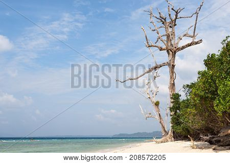 Dead Tree In A Forest On A Beach At Havelock Island, Andamans, India. Huge Dead Tree On A Seashore.