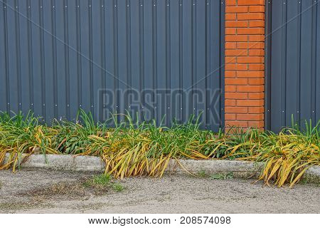 vegetation and grass in front of a private fence in the street