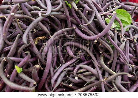 Purple Bush Beans At The Farmers Market.