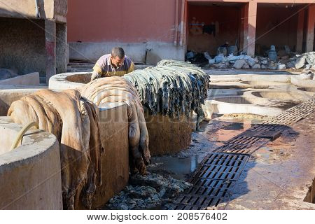 Worker In The Leather Traditional Tannery. Marrakech. Morocco