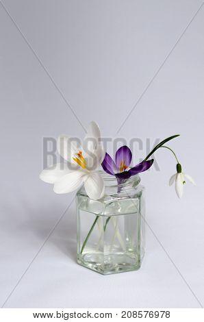 A Still Life of Springtime Flowers in a Jar