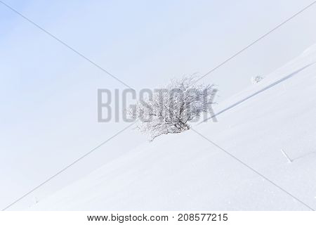 tree in the snow against the blue sky .