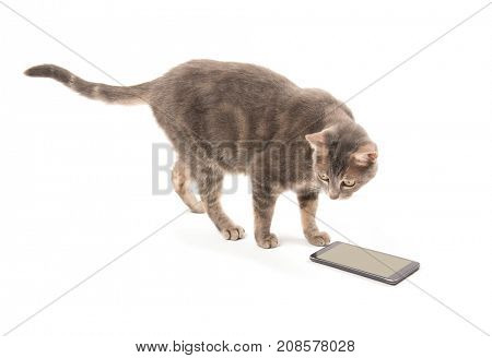Blue tabby cat standing in front of a smart phone, on white background