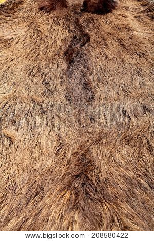 Wild Boar Fur Texture, Wildlife Animal, Close Up