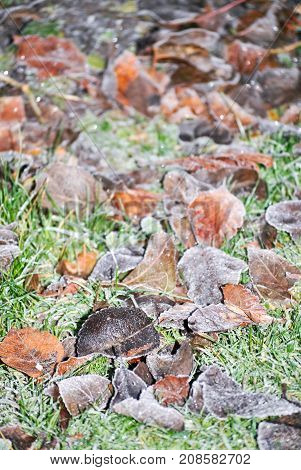 Frosty Autumn Leaves on an Icy Lawn