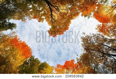 Heart surrounded by autumn trees