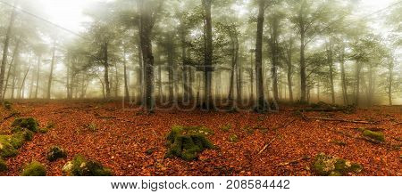 Autumn is comming, green forest in a red carpet