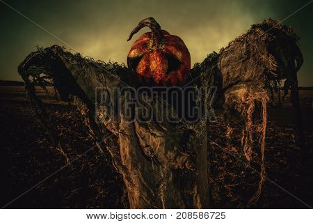 Halloween legend. Portrait of Jack-lantern with a pumpkin on his head standing in the field as a scarecrow.