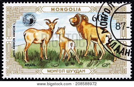 MONGOLIA - CIRCA 1987: a stamp printed in Mongolia shows Mountain Sheep Ovis Ammon male female lamb circa 1987