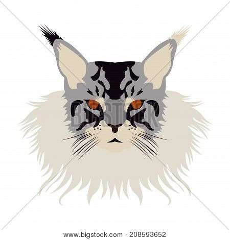 Isolated Maine Coon cat avatar on a white background, Cat breed, Vector illustration