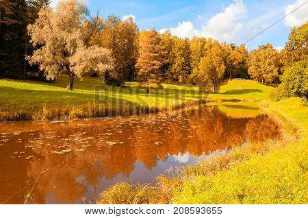 Autumn landscape. Yellowed autumn trees at the bank of the river in sunny autumn day. Forest autumn trees near the forest autumn river. Sunny autumn forest landscape. Colorful autumn nature