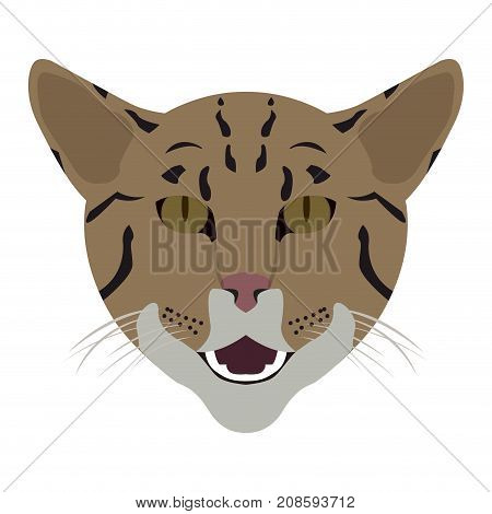 Isolated bengal cat avatar on a white background, Cat breed, Vector illustration