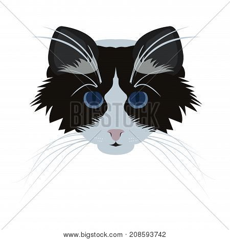 Isolated ragdoll cat avatar on a white background, Cat breed, Vector illustration