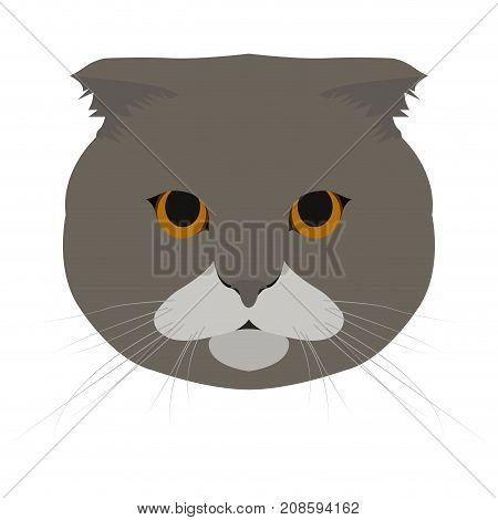 Isolated Scottish fold cat avatar on a white background, Cat breed, Vector illustration