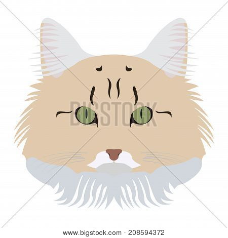 Isolated norwegian forest cat avatar on a white background, Cat breed, Vector illustration