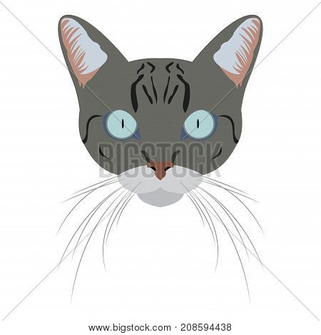 Isolated Egyptian mau cat avatar on a white background, Cat breed, Vector illustration