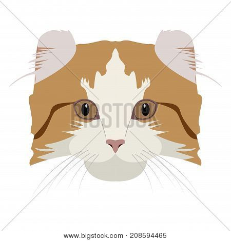 Isolated American curl cat avatar on a white background, Cat breed, Vector illustration