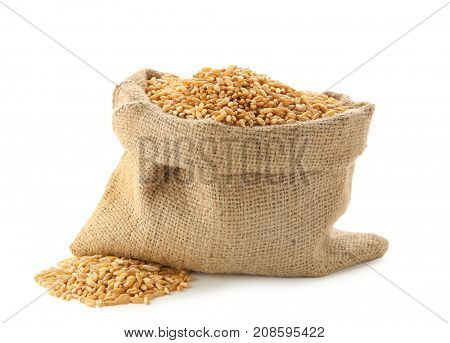 Wheat grass seeds in sackcloth bag on white background