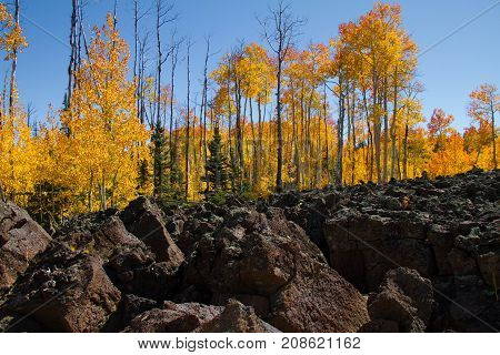 Incredible lava field and autumnal foliage in Dixie National Forest just outside Cedar Breaks National Monument in Utah.