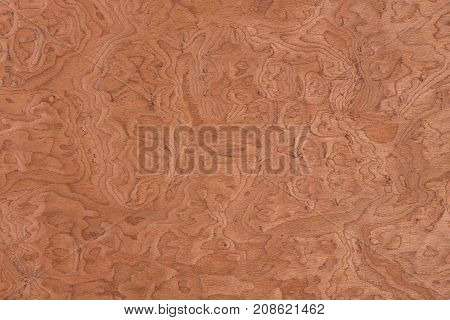 Vavona wood design texture. Natural background closeup. Extremely high resolution photo.