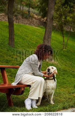 Young careless african lady sitting on bench in park and holding dog labrador