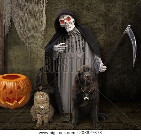 The cat with his friend dog are standing next to a grim reaper. It's Halloween.
