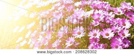Bright Flowerbed