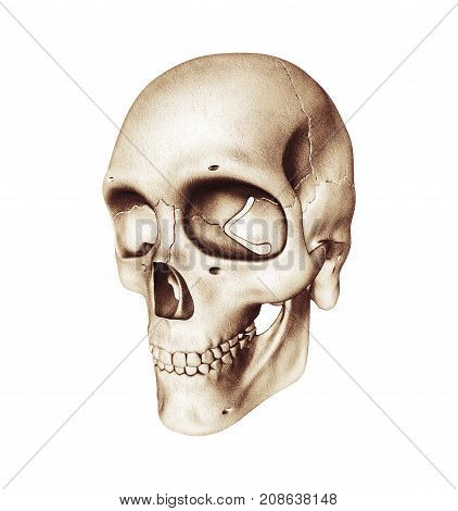 Three-quarter view of human skull on a white background