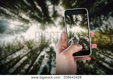 Close-up of hand holding smart phone against low angle view of trees in forest against sky