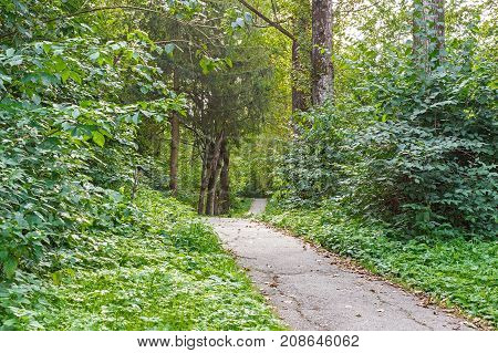 Walking trail tropical forest trees bushes. Beautiful Green Forest In Summer.