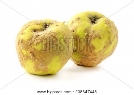 Hairy russian quince on a white background