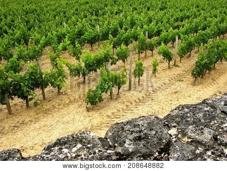 Vineyards and stoned wall near Bordeaux in France