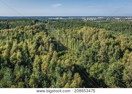 View on forest area in Gdynia city in Poland