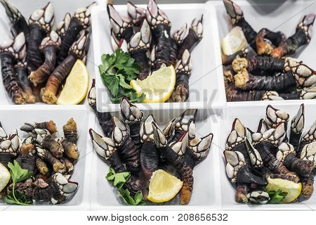 fresh percebes goose barnacles rare unusual seafood on display in Portugal