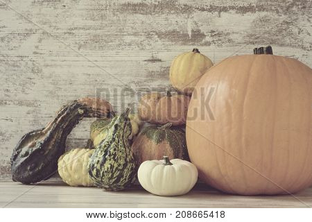 closeup of an assortment of different pumpkins against a rustic wooden background with a blank space on the left