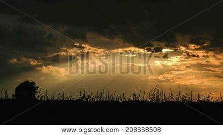 Sunset late in the evening against the background of the horizon and summer field in good weather