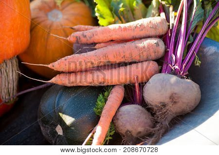 Freshly Harvested Different Vegetables, Autumn Day