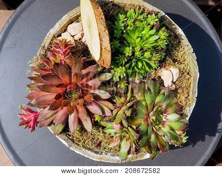 Top View Shot Of Small Cactus In Many Pot For The Art And Beautiful Background.