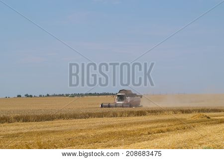 Combine harvester is working on yellow agricultural field under blue sky